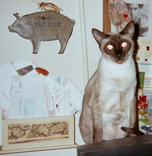 Princess - Seal Point Siamese