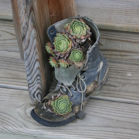 An old work boot with the toe cut out becomes a planter for a variety of succulents and decorates the steps of a wooden porch.