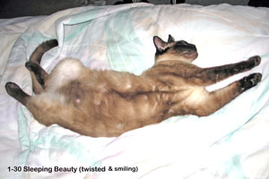 Beauty (Sealpoint Siamese)