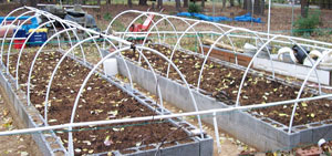 Raised Beds With PVC Greenhouse Frame