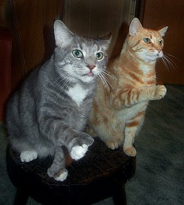 Suma And Mamiya (Tabby Cats)