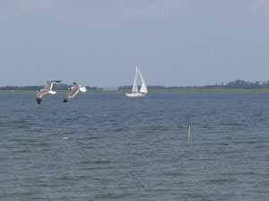 Sailboat and Gulls in South Carolina