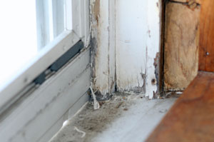 Avoiding Lead In Your Home