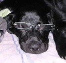 Amy (Black Lab)