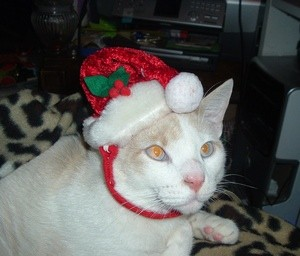 C.C Boy (Candy Cane) The Cat
