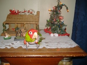 Jake At Christmas (Conure)