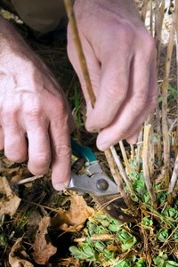 Cutting Back Perennials In The Fall