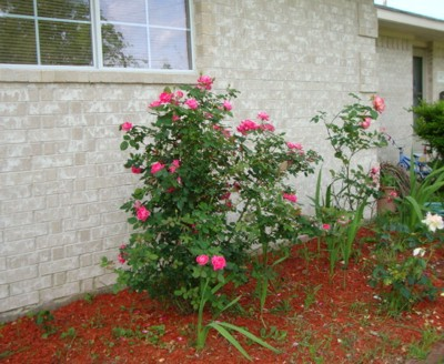 Scenery: Spring Flowers (Houston, TX)