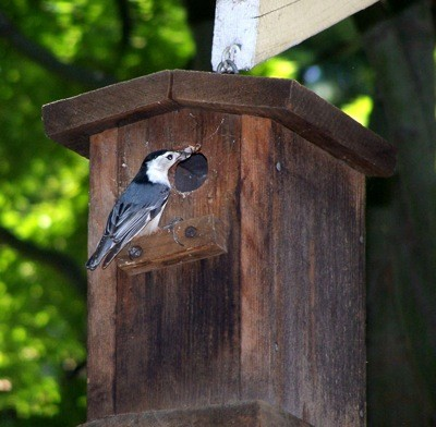 Wildlife: Backyard Birdhouse