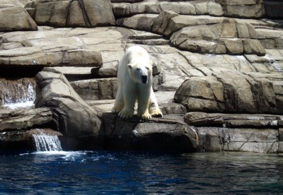 Scenery: Polar Bears (Pittsburgh Zoo)