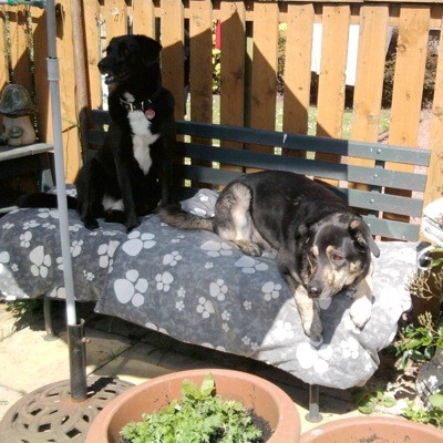 Acey and Gizzy (Mixed Breed)