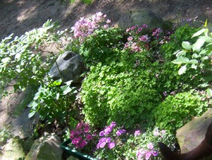 Large Rock Garden Border
