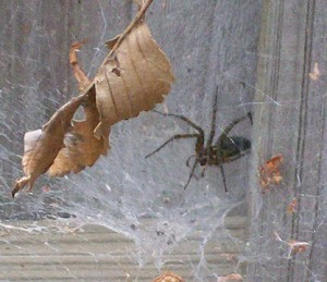 Wildlife: Creepy Spider and Web