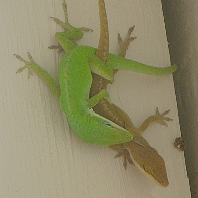 Wildlife: Lizard