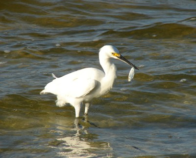 Wildlife: Shore Birds