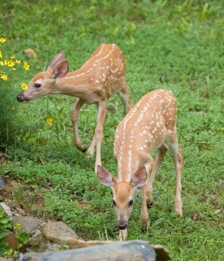 Top 25 1000 ideas about keeping deer out of garden on How to keep deer out of garden fishing line
