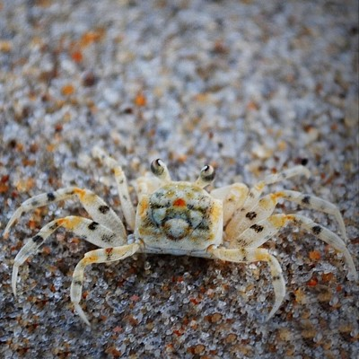 Wildlife: Crab