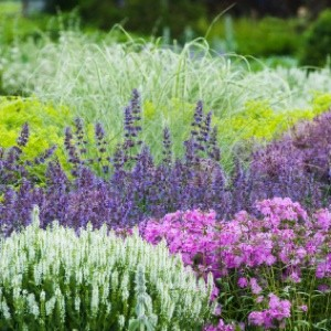 Making a flower bed thriftyfun for Low maintenance plants for garden beds