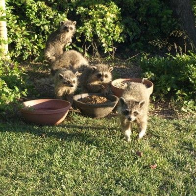 Wildlife: Backyard Visitors