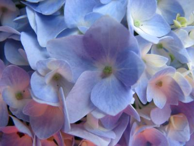 RE: Propagating Hydrangeas