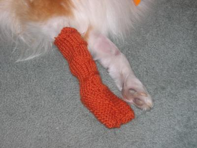 RE: Pattern for Knitted Dog Booties