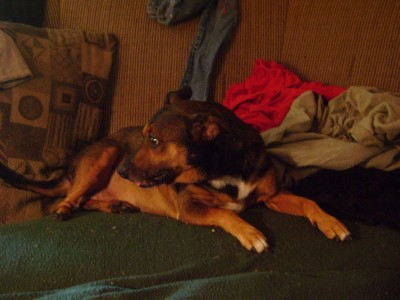 Amazon.com: ascriptin for dogs