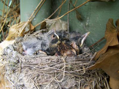 RE: Baby Birds Just Hatched