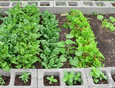 RE: Garden: Planting In Cinderblocks