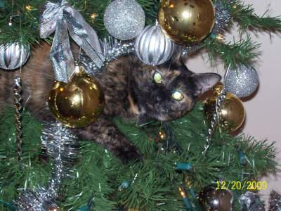 RE: Keeping Cats Out of the Christmas Tree