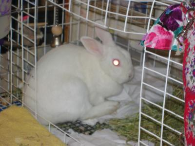 RE: Snowbelle (White Rabbit)