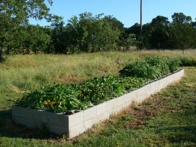 RE: Garden: Concrete Block Raised Bed
