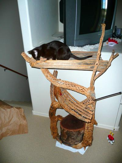 RE: Making Your Own Outdoor Cat Tree