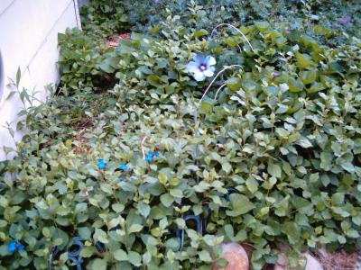 RE: Ground Cover Advice