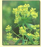 RE: Scenery: Yellow Wildflowers (MI)