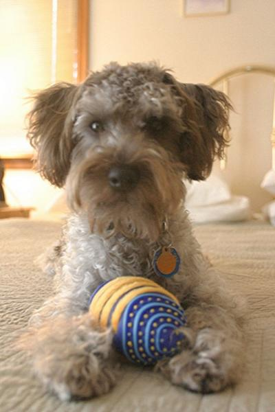 Schnoodle Haircuts | Motorcycle Review and Galleries