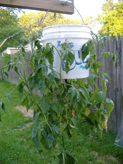 RE: Garden: Topsy Turvy Tomato Grower