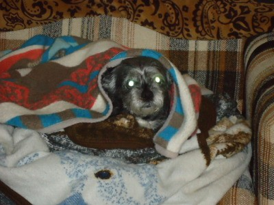 Smelly Black Tar Stuff In Dogs Ear Thriftyfun