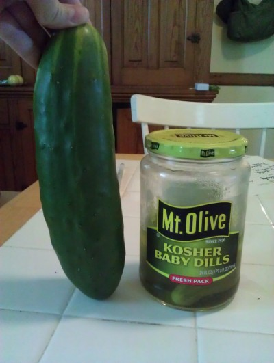 RE: Growing Cucumbers