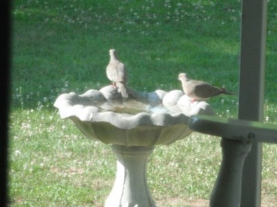 RE: Keep Birdbath Clean