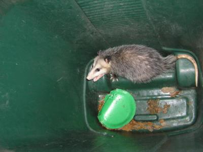 RE: Getting Rid Of Opossums