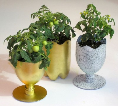 Soda bottle as a beautiful tomato planter