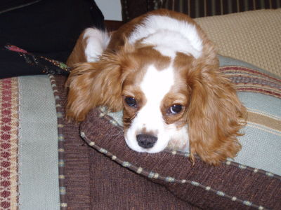 Remedies For A Dog With Diarrhea Thriftyfun