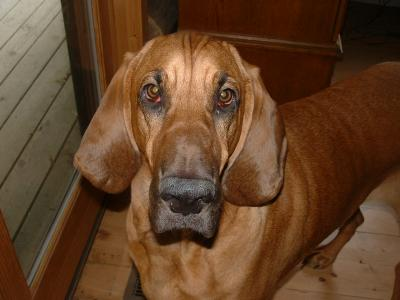 RE: Natural Treatment for Yeast Infection in Dog's Ears