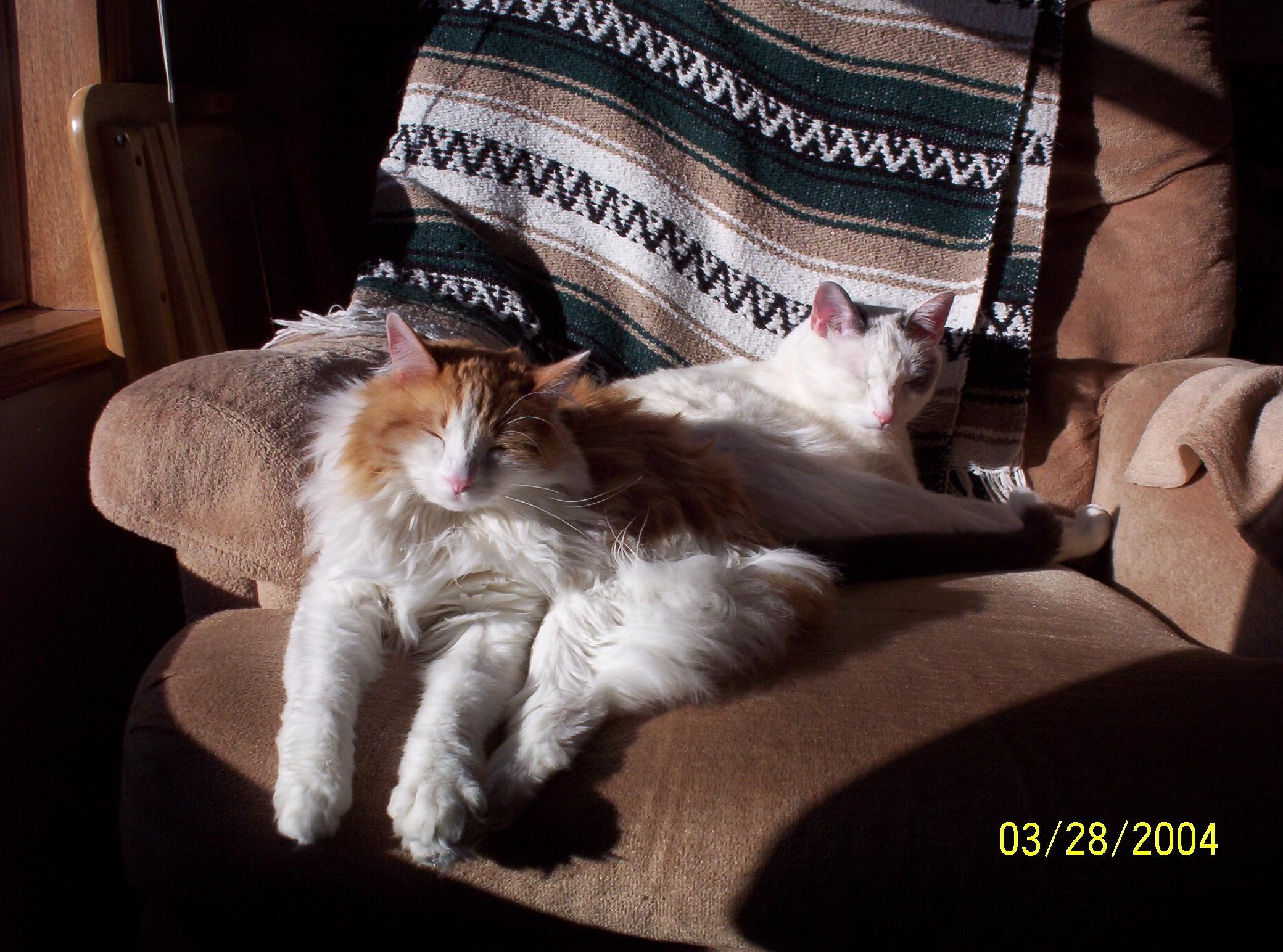 Cat Scratching Furniture Thriftyfun