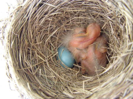 Photo of Baby Birds