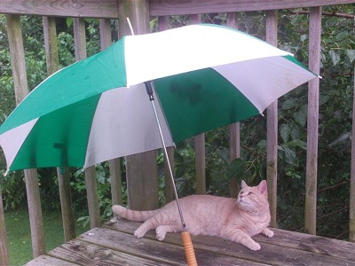 A cat under an umbrella outside