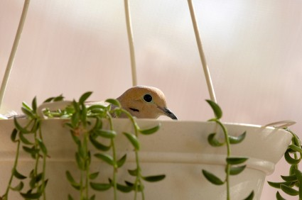 Photo of a hanging planter with a bird in it