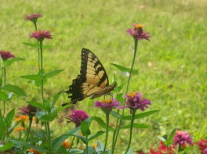 Photo of Butterfly Enjoys Sunshine and Wildflowers