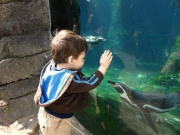 A young boy at the zoo, looking into a glass tank.