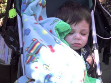 A young boy asleep in his stroller.